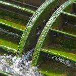 algaewheel-closeup