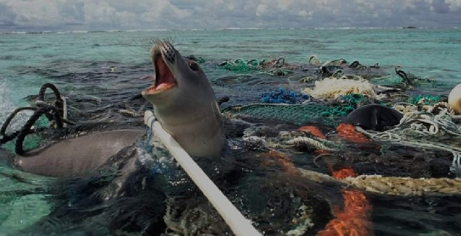 Seal in plastic